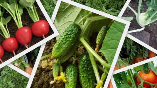 warzywa z vitamag AGRO